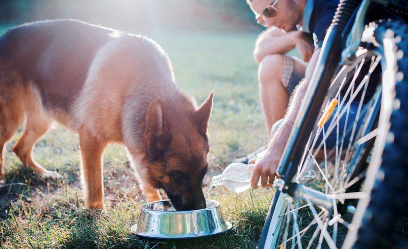 Radurlaub mit Hund