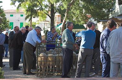 Immer viel Diskussionsstoff auf dem Tiermarkt von Sineu