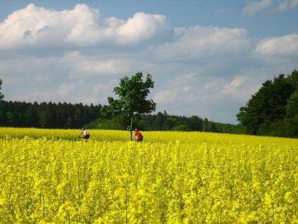 Hochschwarzwald-Baar-Runde
