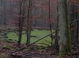Bärenzwinger
