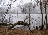 Spickelweiher im Winter