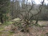 Jägersburger Moor