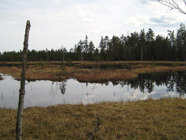 Wildsee im Kaltenbronner Hochmoor