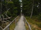 Bohlenweg durch das Hochmoor