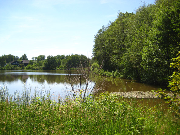 Motschweiher Waldmohr