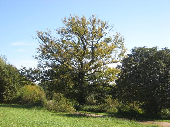 Weisenbaum bei Altenkirchen