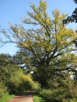Weisenbaum