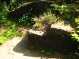 Römerzeitlicher Steinbruch
