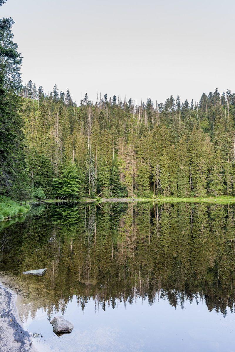 Wilder See, Ruhestein