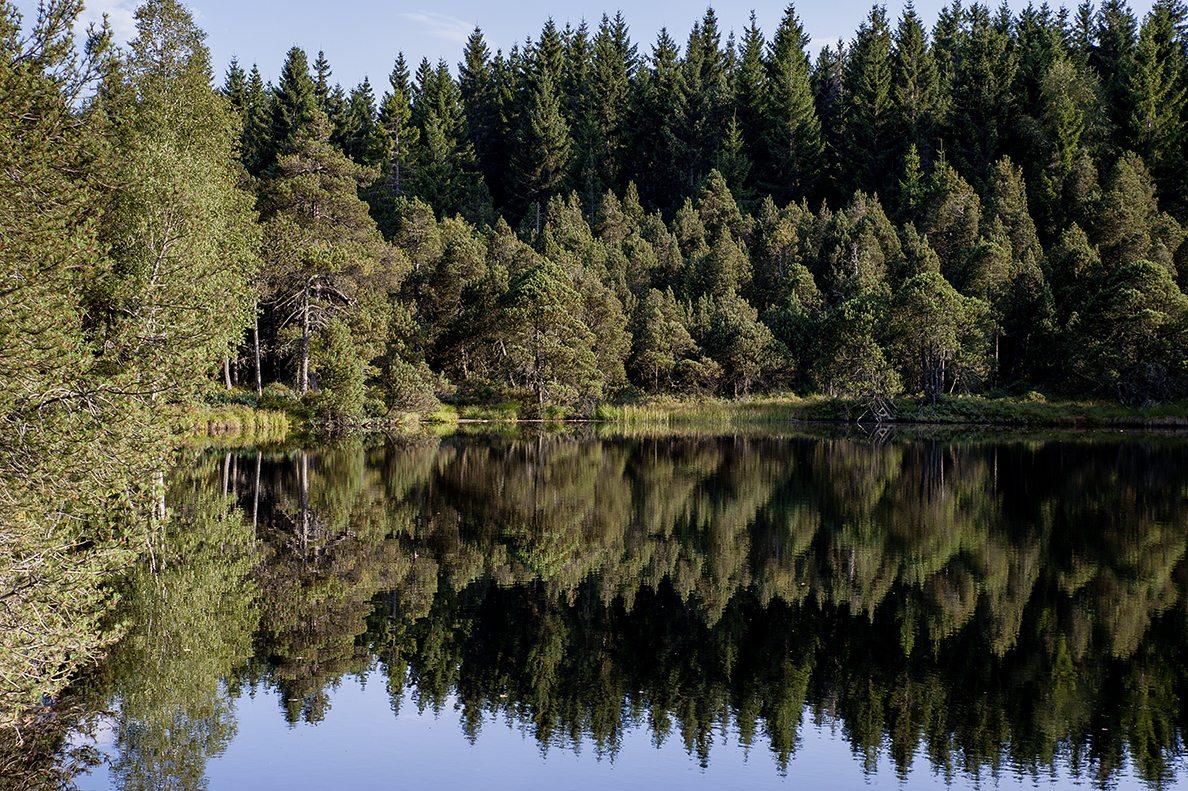Blindensee im mittleren Schwarzwald