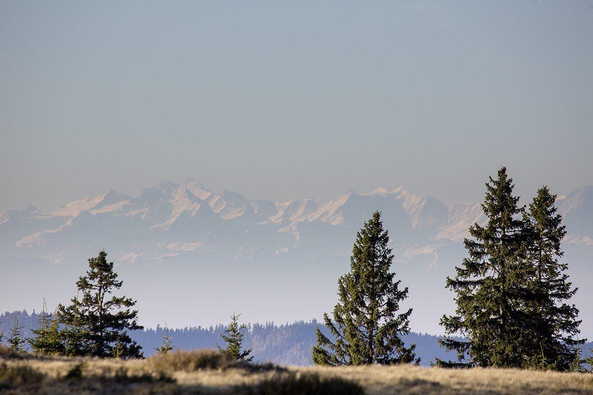 Stübenwasen mit Alpenblick