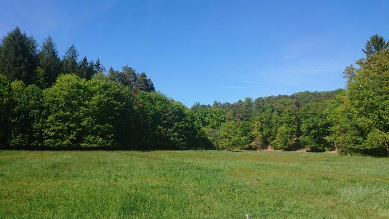 Ehem. Mühlenweiher im Lambsbachtal